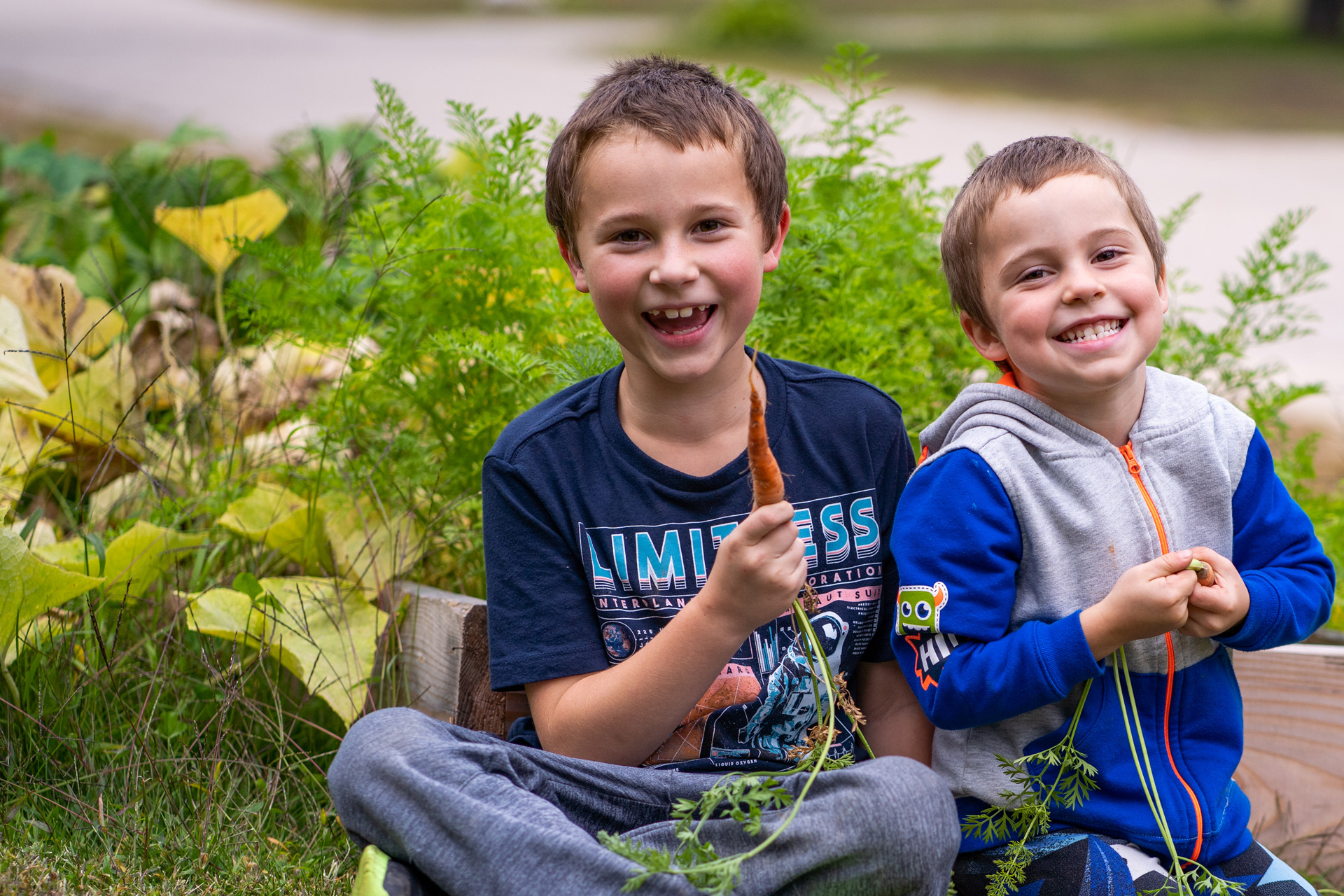 Two boys pull carrots from the ground