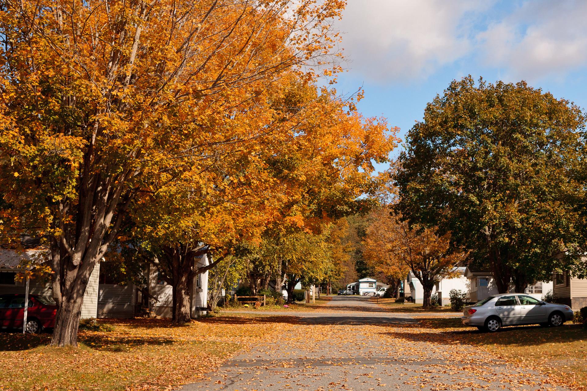 Autumn colors on a leafy street